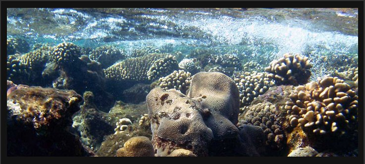 2005 Egypt - Undersea Photography 01